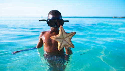 starfish lifting