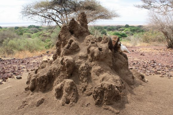 termitiera_safari_tanzania_karater_ngorongoro_africa_termites_nature