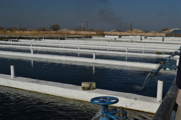 Aquaculture_in_Armenia (Wikimedia Commons)