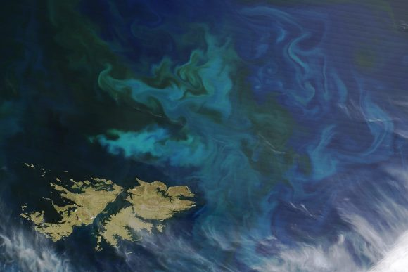 Phytoplankton_Blooms_off_the_Falkland_Islands (Wikimedia Commons)