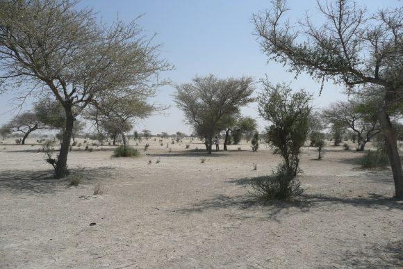 Sand Bush Africa Sahel Sahara