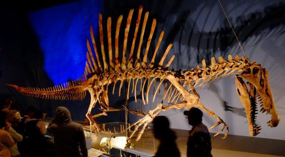 Spinosaurus_in_Japan_Expo (Wikimedia Commons)