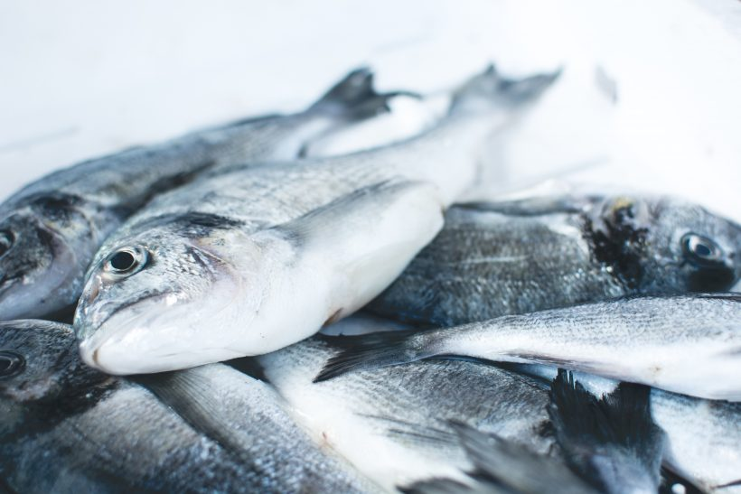 Scientists Said Ocean Will Feed Us By 2050, Are We On The Right Track?