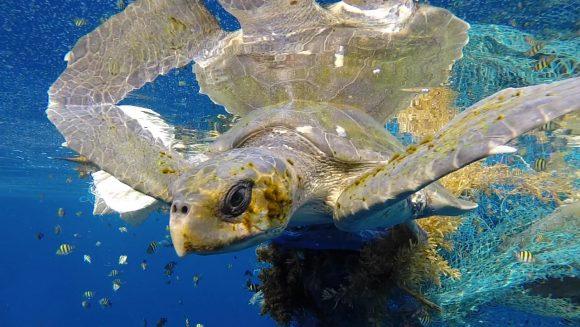 plastic in ocean (Wikimedia Commons)