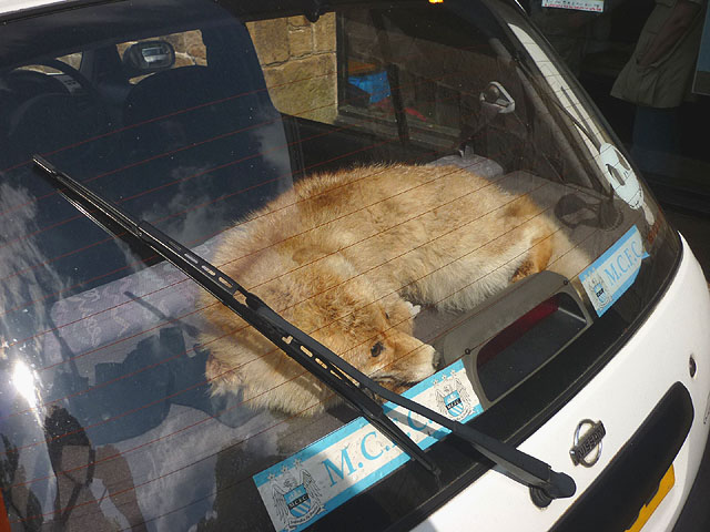 poor dog in a car (Geograph)