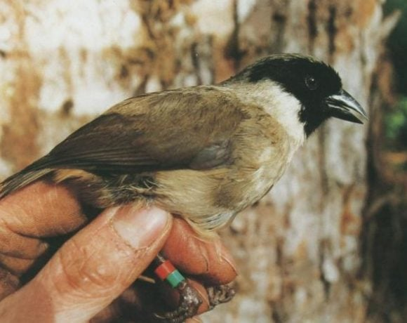 8 Birds Went Extinct In This Last 10 Years, Including A Movie Star