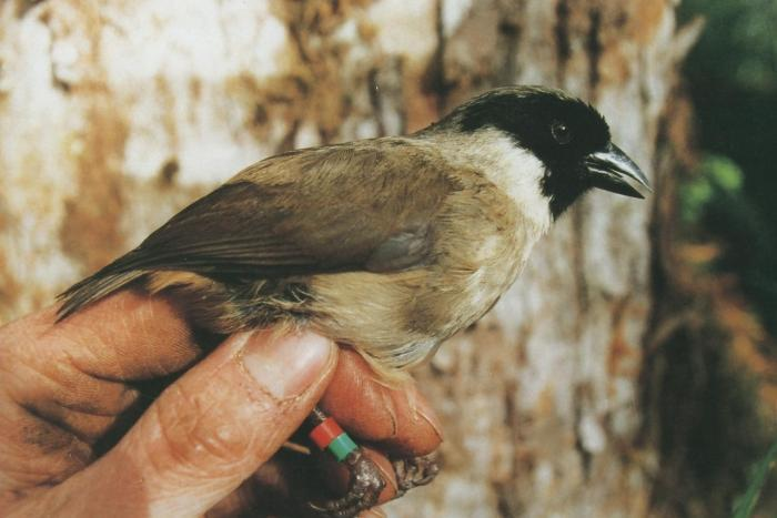 8 birds went extinct in this last 10 years including a movie star