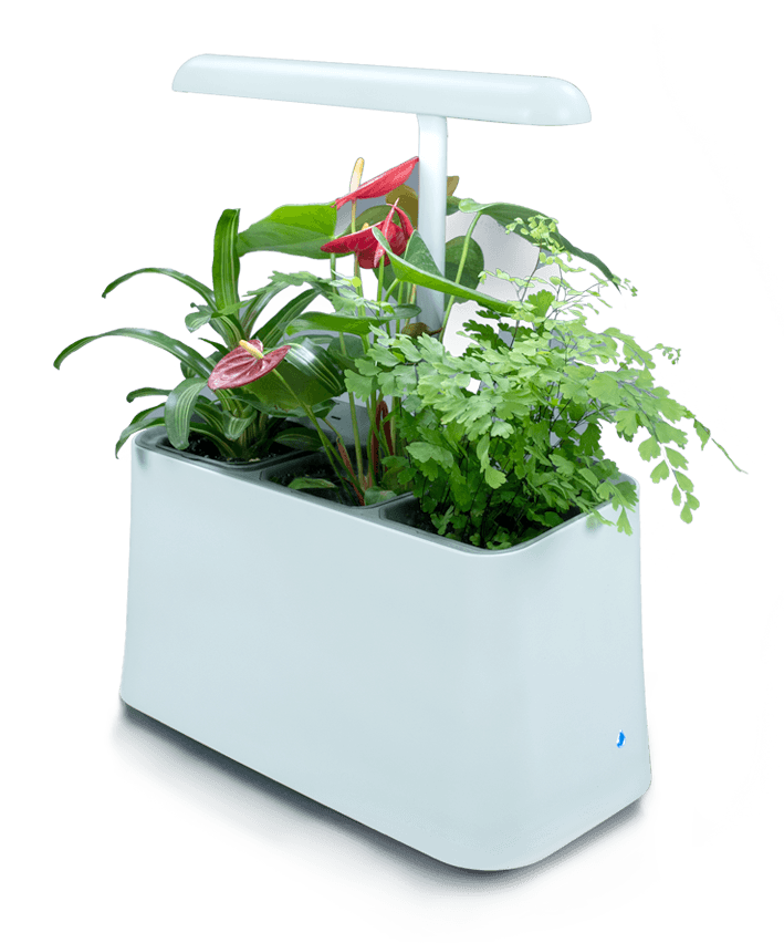 Plant-Based Air Purifier, More Than Just Indoor Plants?