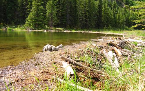 Horseshoe-Lake-beaver-dam (NPS Photo, Robbie Hannawacker)