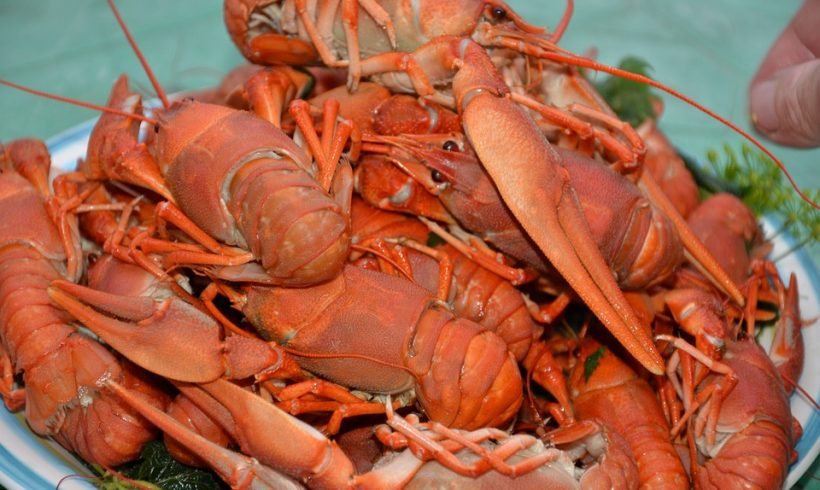 Can Lobster Feel The Pain Of Being Boiled Alive?