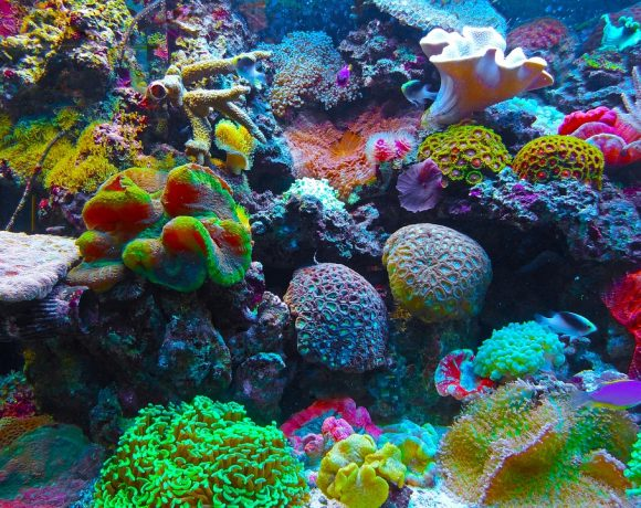 Sun Shield Might Be The Answer To Fight Coral Bleaching