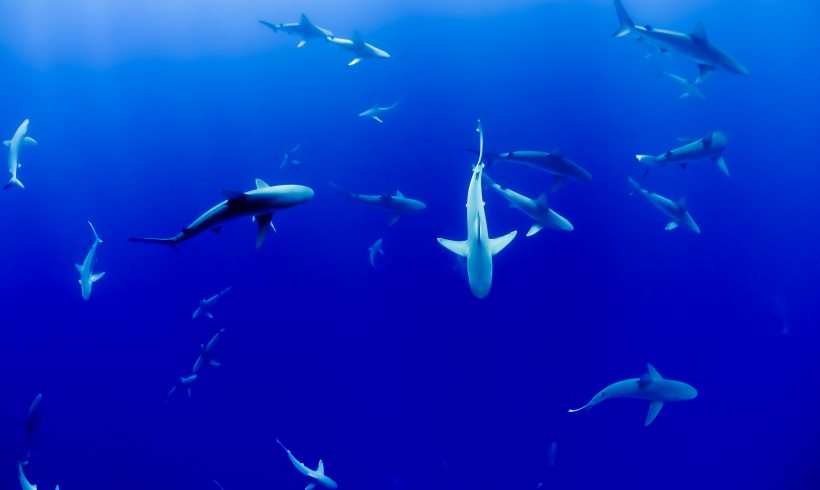 These Sharks Might Have Eaten More Vegetables Than You