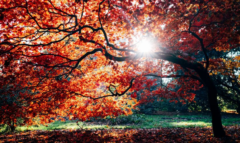 What's So Special About Autumn, The Melancholic Season?