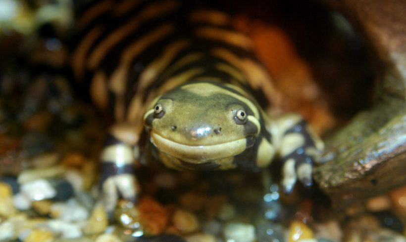 10 Invasive Species (Animals and Plants) That You Might Not Know Yet