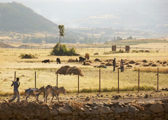 Farmland In Ethiopia by A.Davey