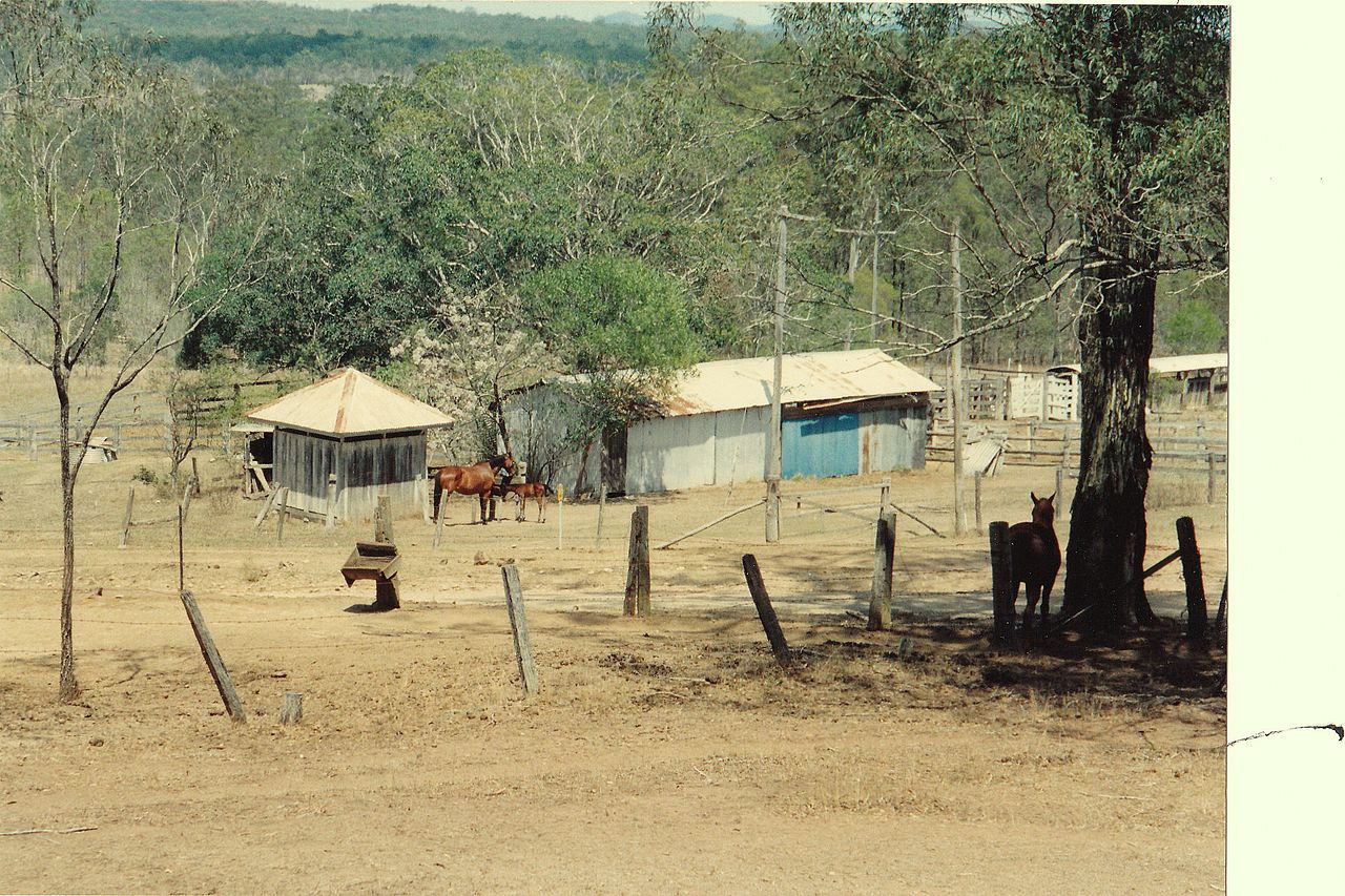 drought in a horse farm by Sue Allen Wikimedia Commons