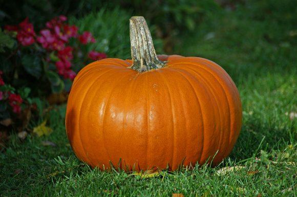 pumpkin (wikimedia Commons)