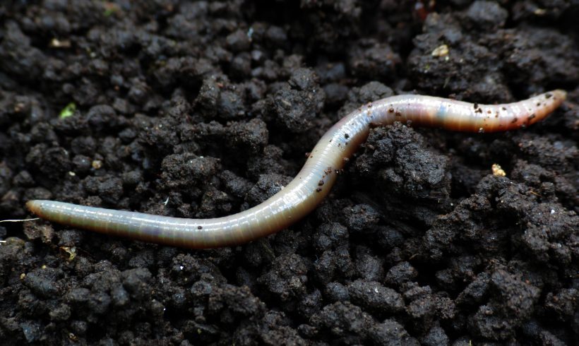 Even Worms Despise Microplastic Because It Hurts Them