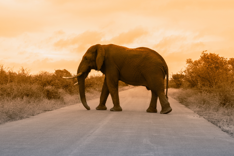 responsible wildlife trips