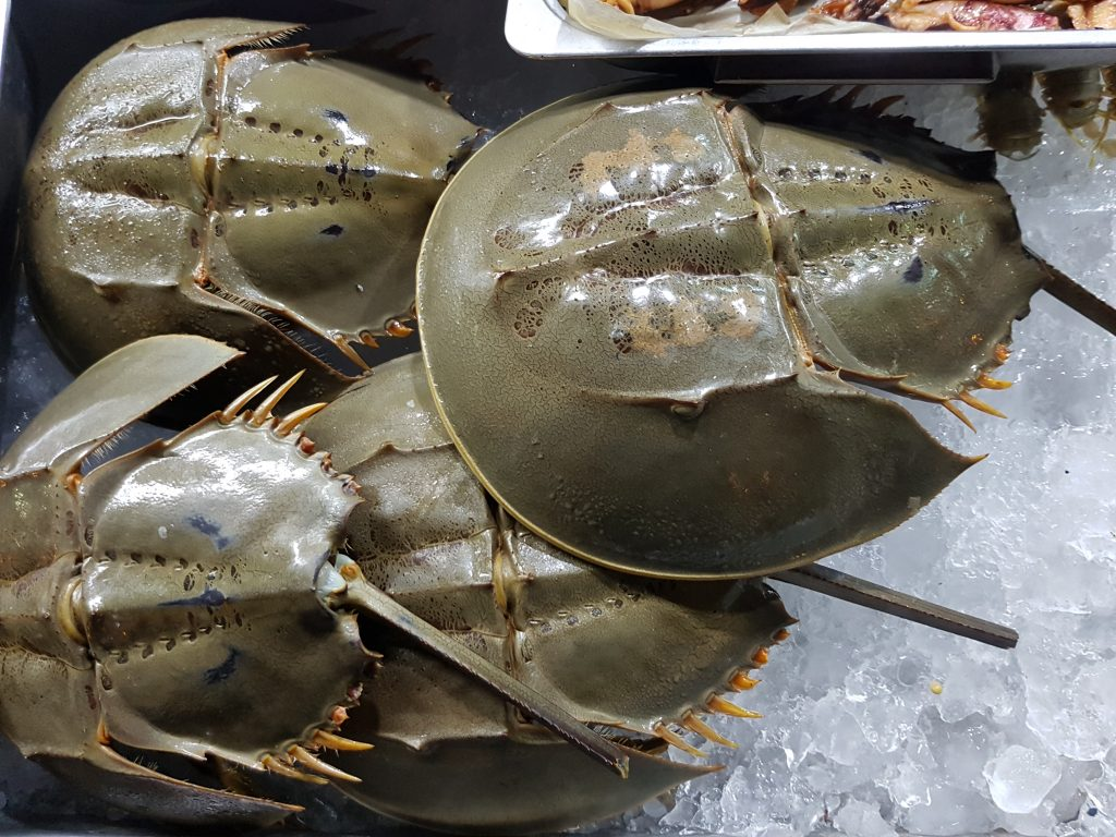 Horseshoe_Crab (Wikimedia Commons)