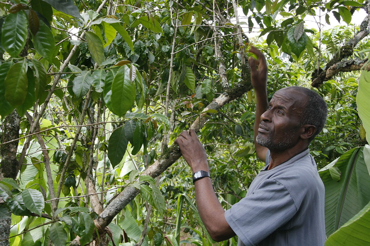 Coffee farmer in Ethiopia by DFID - UK Department for International Development Wikimedia Commons