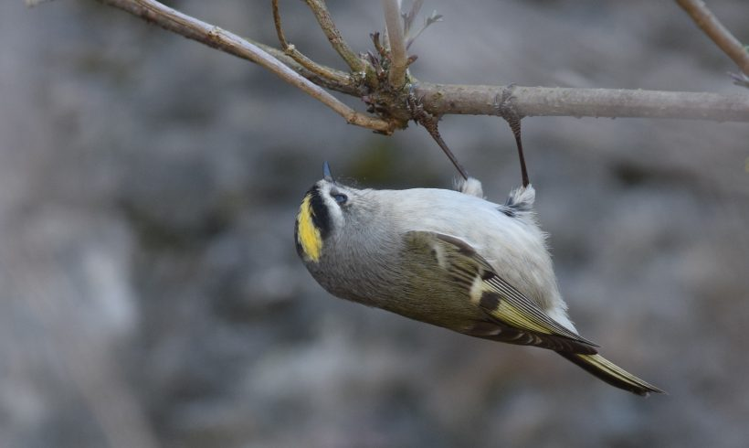 Have You Ever Wondered How Birds Survive The Cold Winter Nights?
