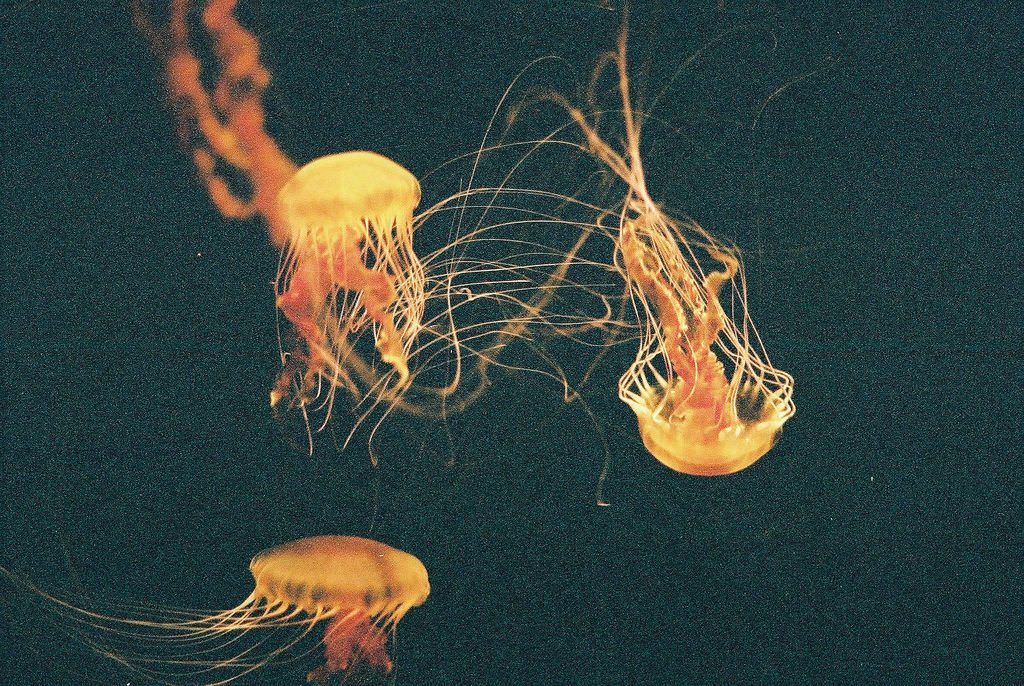 Jellyfish by Hodgers