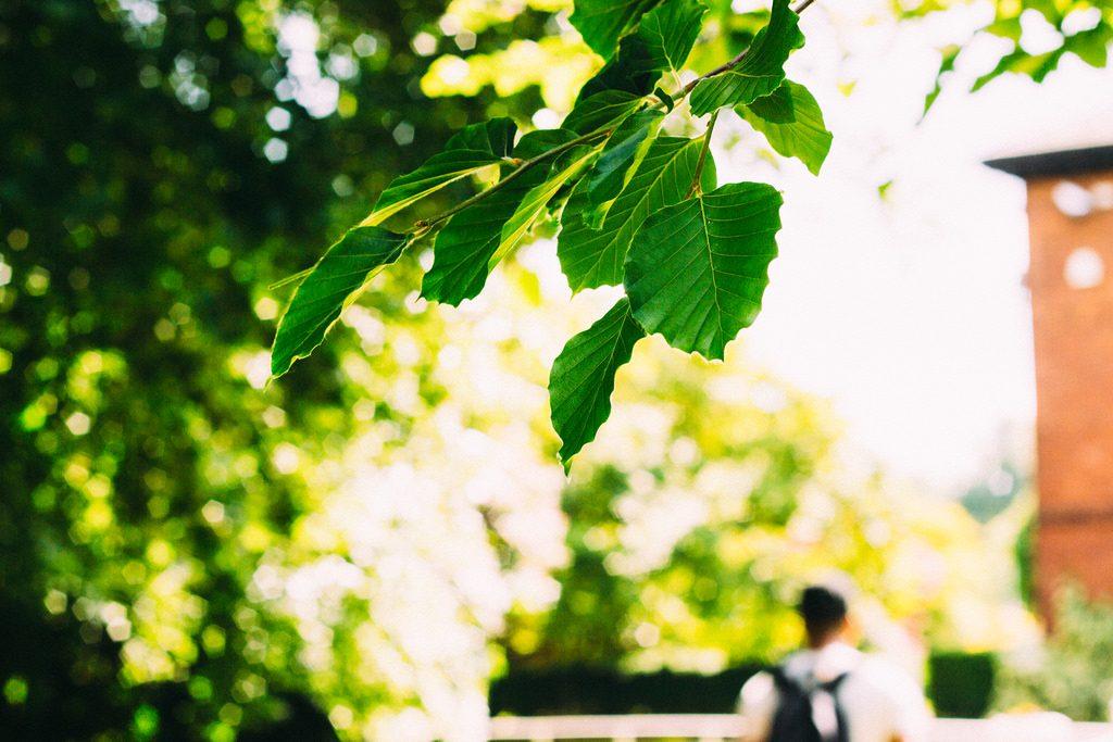 Photosynthesis by Alex Holyoake