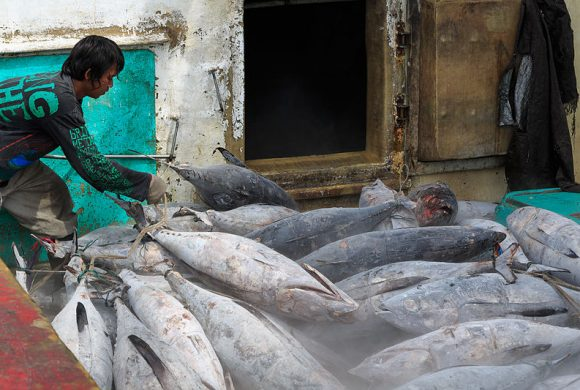 Unique Ways Indonesia Do To Save Their Tuna Population And Production