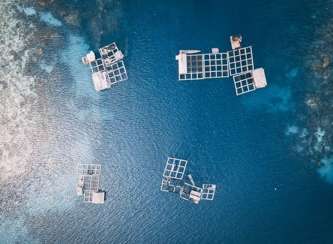 Aquaculture, Conservation, And The Relationship Between Those Two