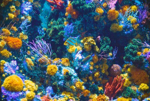 Coral, The Prettiest Hunter Underwater