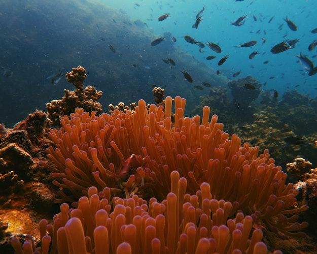 coral pretty