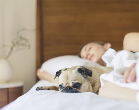 Have Trouble Sleeping? Cuddling With Pets Will Do the Trick