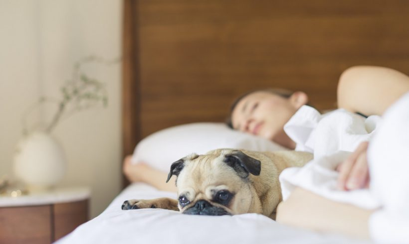 Keeping Your Home Clean the Pet-Friendly Way