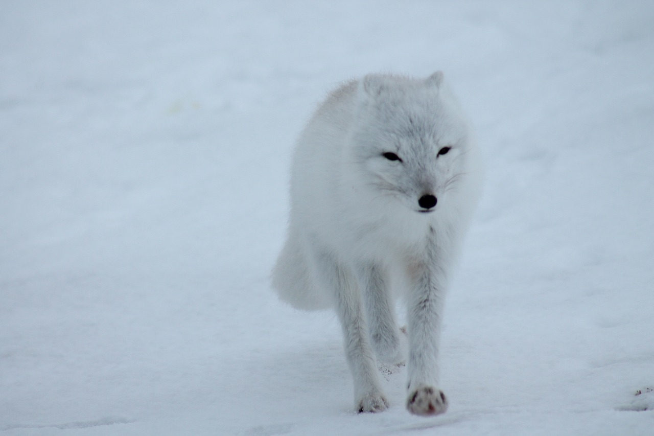 The Fluffy, Mostly White, Dangerous, and Wonderful Wild