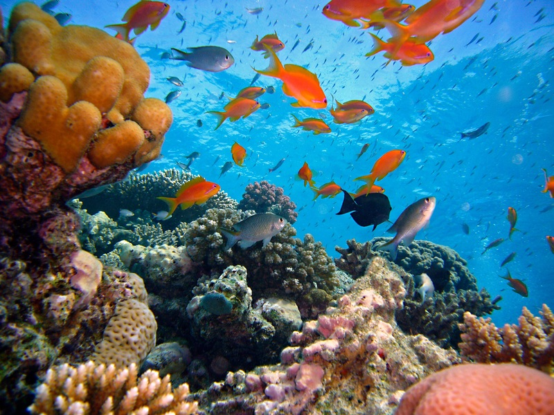 sea-water-nature-