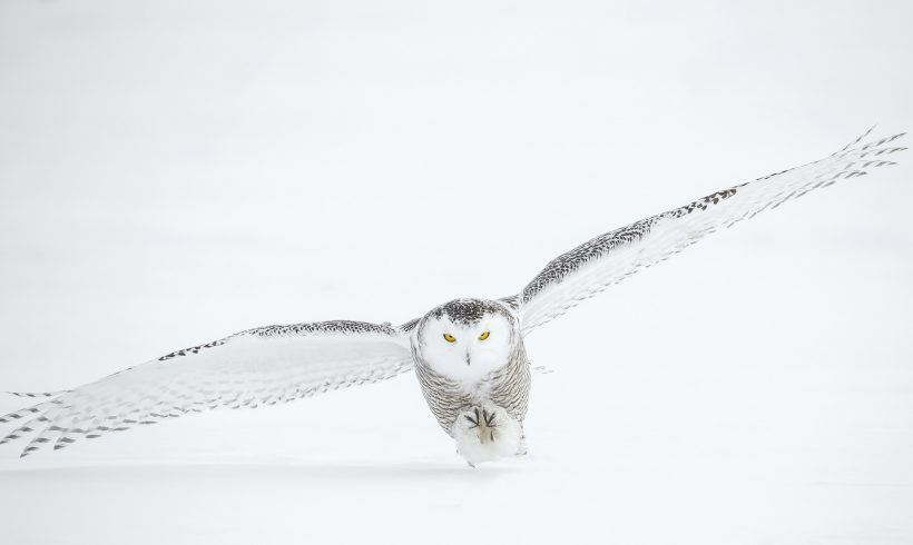 The Fluffy, Mostly White, Dangerous, and Wonderful Wild Animals of the Arctic