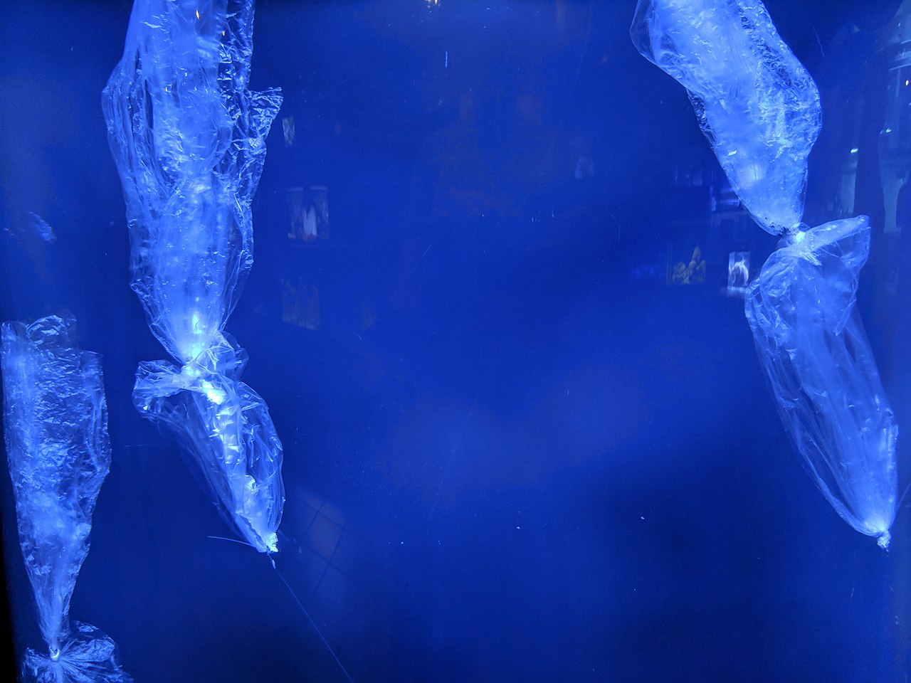 plastic bag in the water that looks like jellyfish. photo by U+1F360 Wikimedia Commons