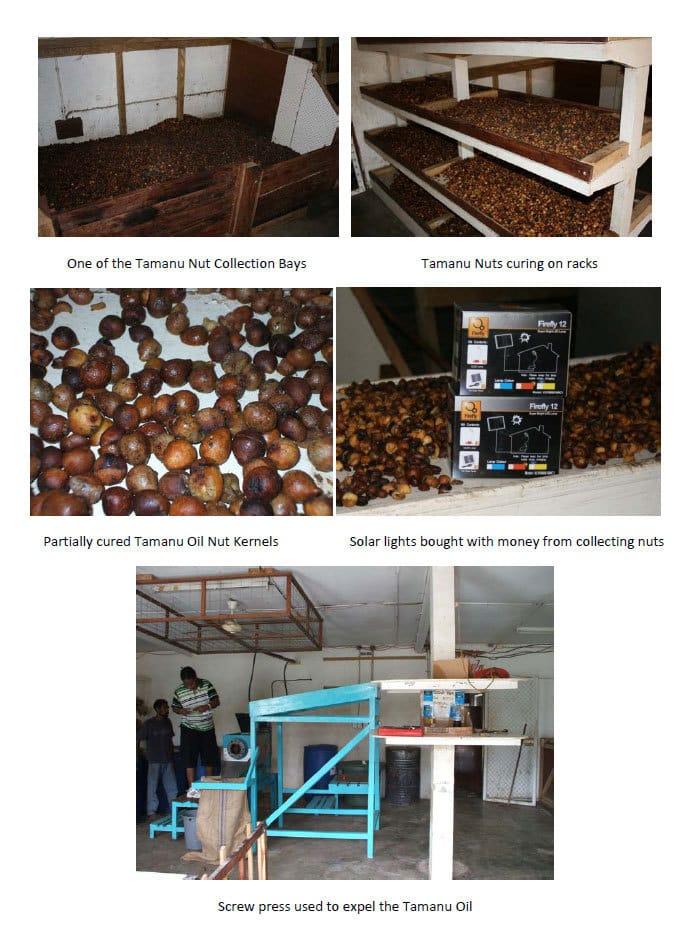 Tamanu-Nut-Manufacturing-2-