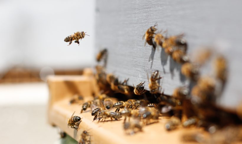 New Study Has Found That Britain Is Losing Pollinating Insects Including Bees