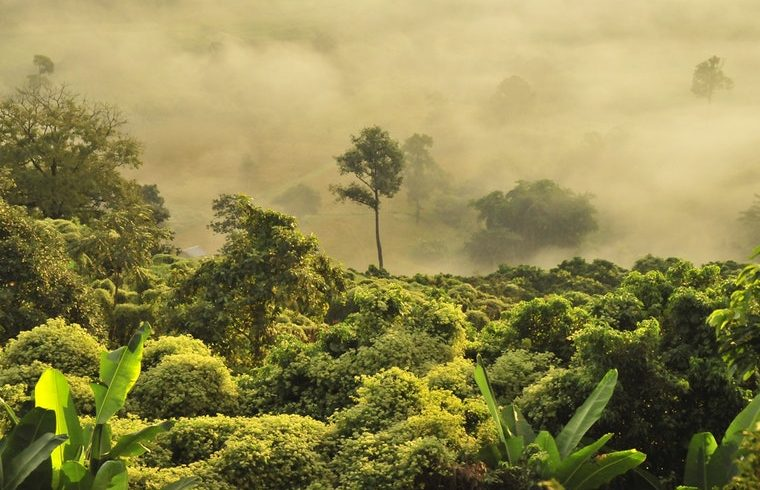Why Developing Countries Can Hardly Protect Their Rainforests?