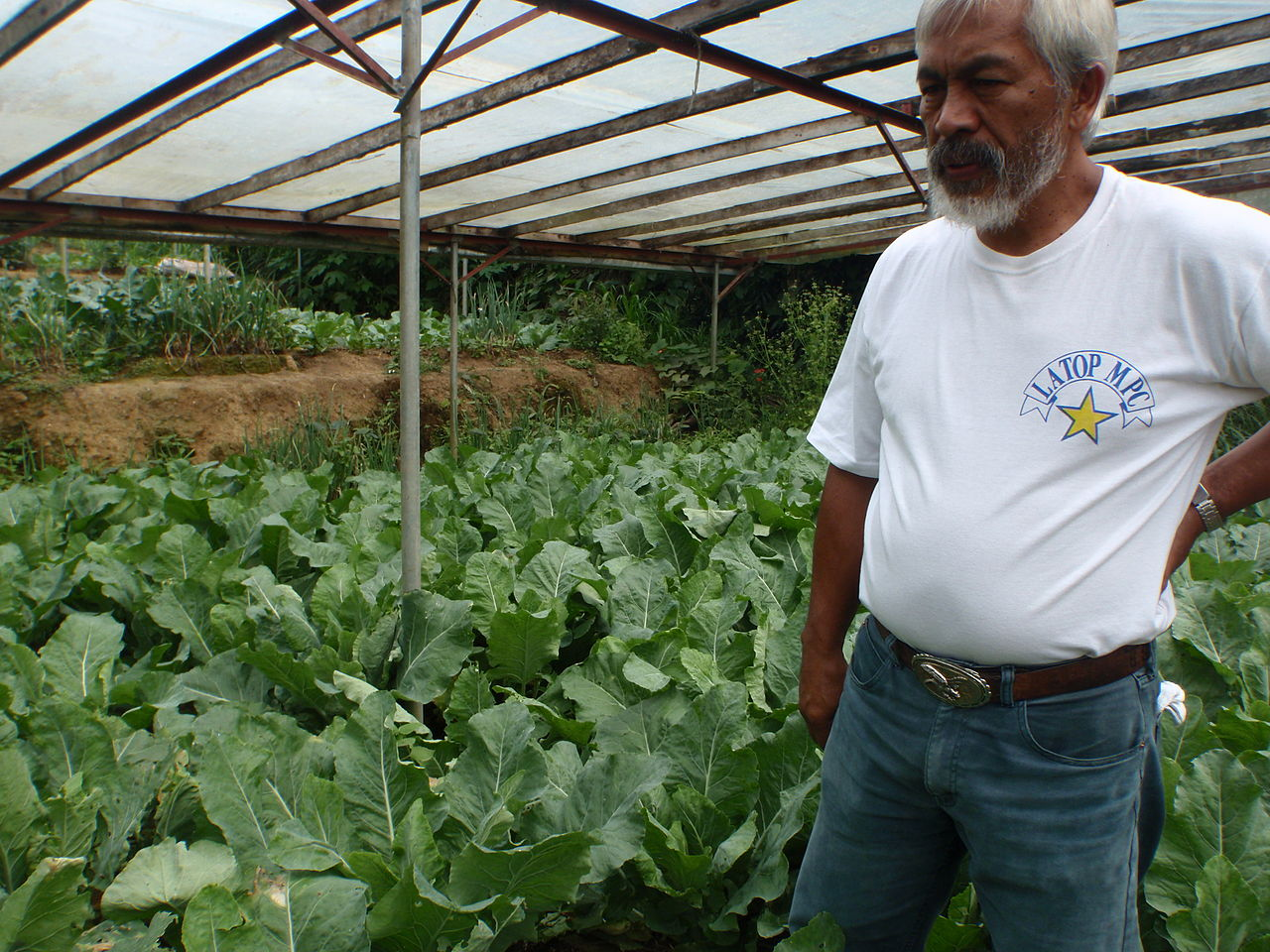 organic farming in the Philippines by Department of Foreign Affairs and Trade Wikimedia Commons
