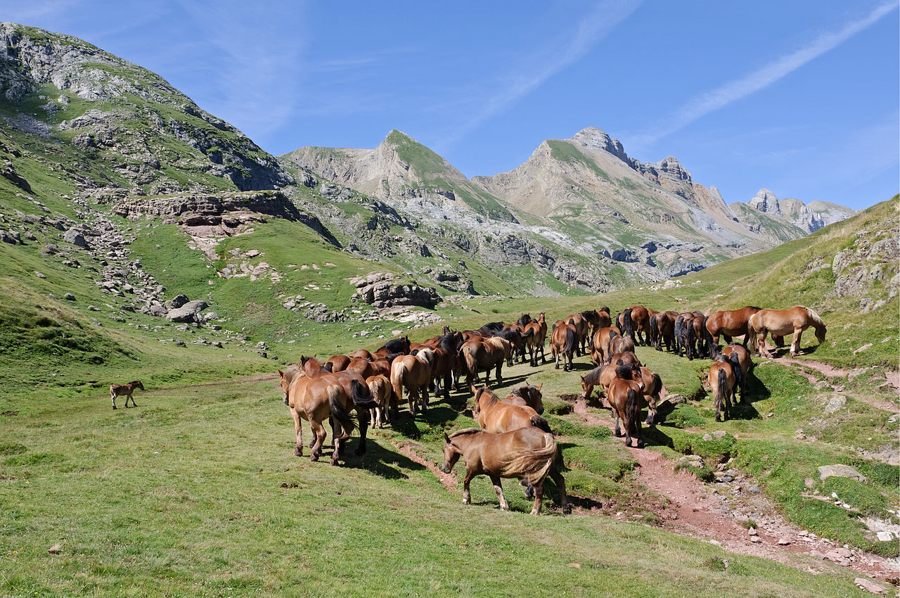 Wild horses grazing in the Pyrenees by Myrabella Wikimedia Commons