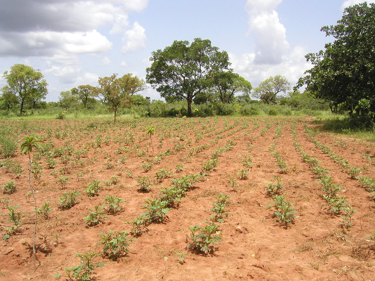 Reforestation attempts only in specific places