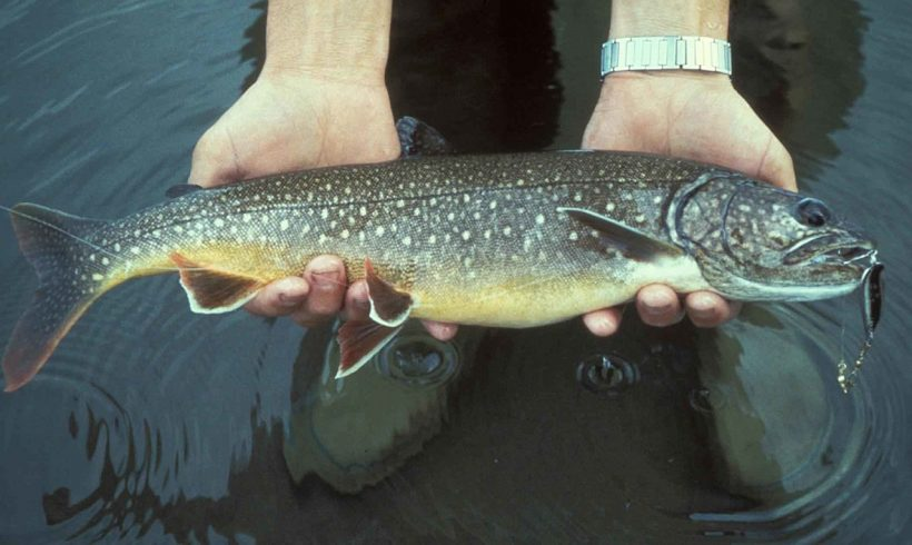 Scientists Have Found an Unconventional Way to Kill Invasive Trout