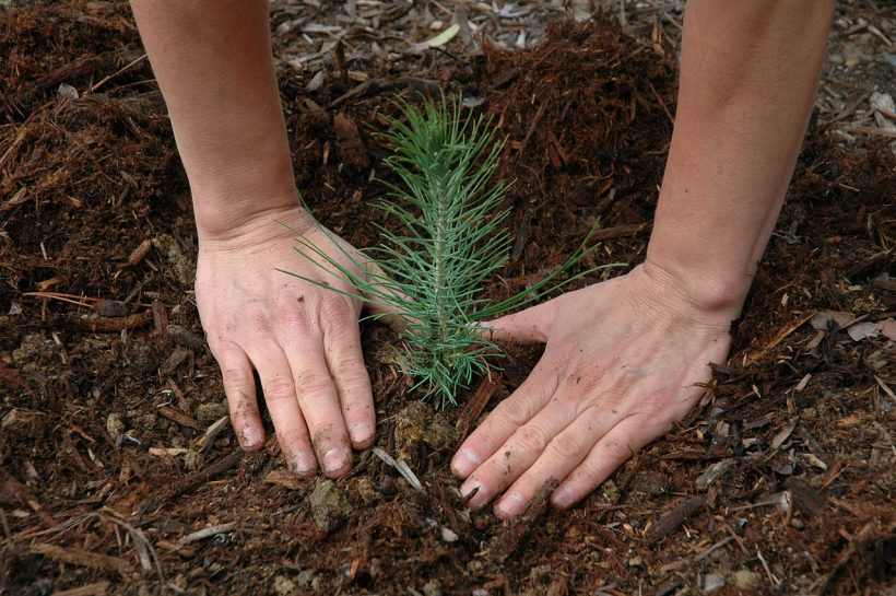 Is Massive Reforestation the Only Key to Our Planet's Salvation?