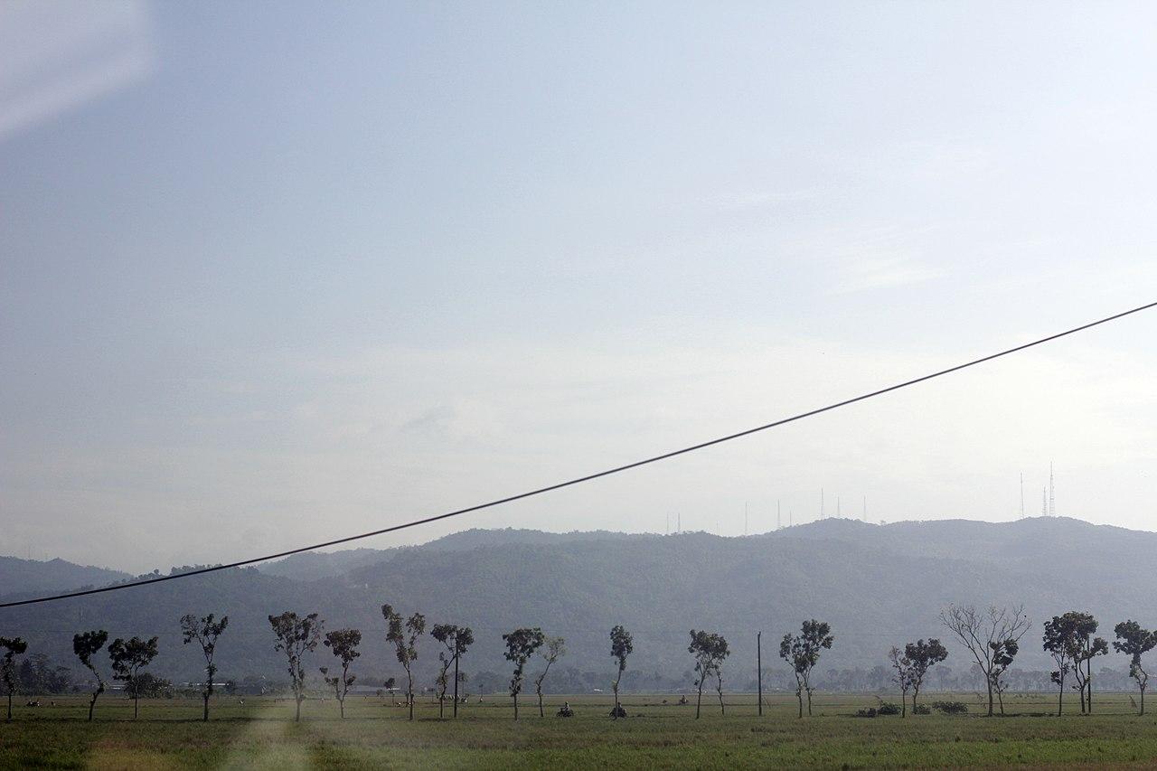 attempt to plant and grow more trees. work by Arini Ayatika Sadariskar Wikimedia Commons