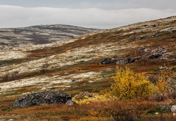 Tundra_on_the_Kola_Peninsula,_Russia (Wikimedia Commons)
