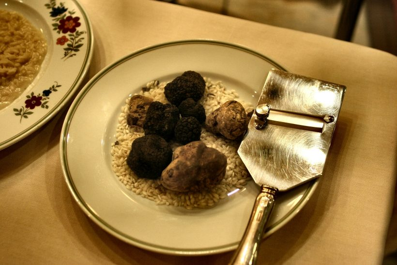 We Might Not be Able to Enjoy Truffles Since Their Existence is Now Threatened