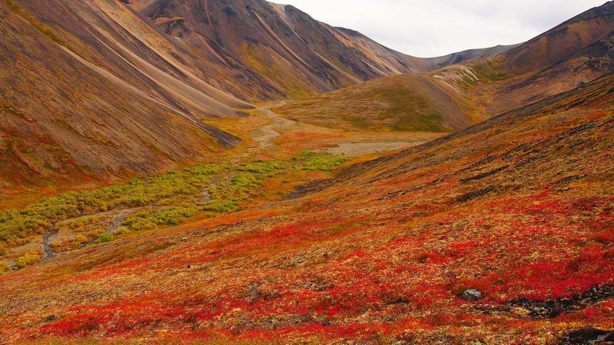 cropped-Tundra-NPS.jpg